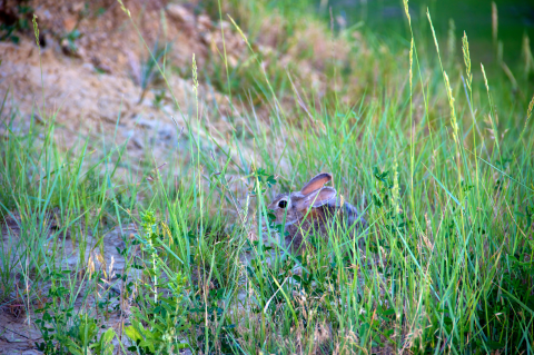 A small friend found in Badlands National Park, SD.